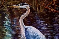 Everglades_heron02
