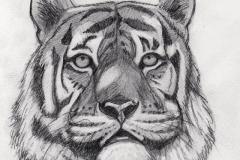 Tiger-Original-Pencil_sm